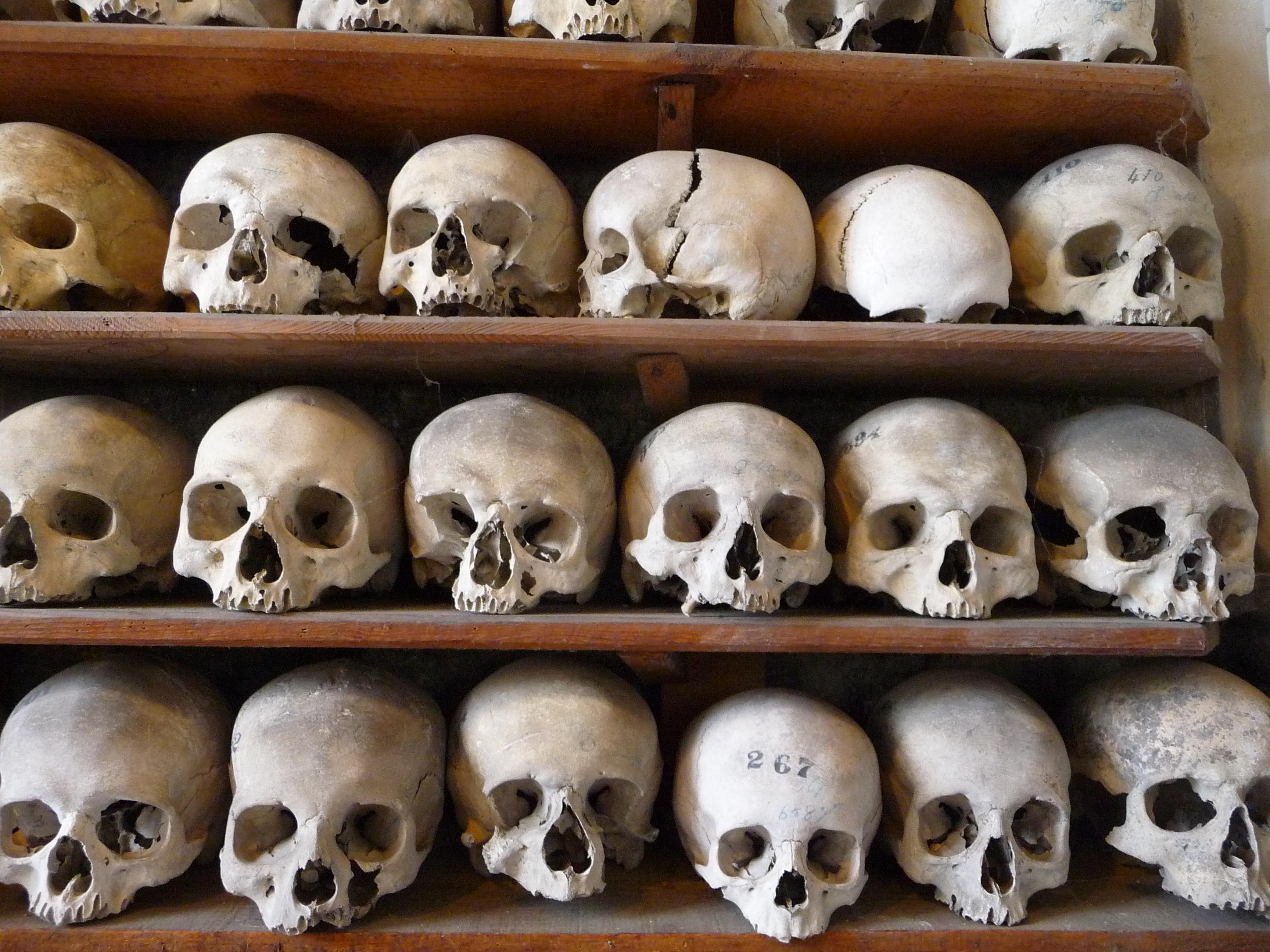 Skulls on a shelf